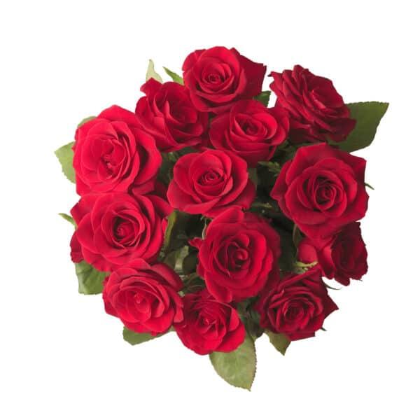 rose rosse recise a gambo lungo - consegna a domicilio