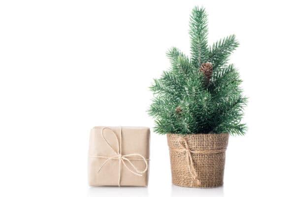 albero di natale decorativo - consegna a domicilio
