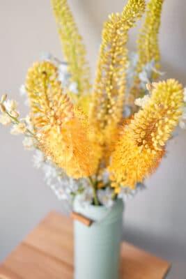 eremurus giallo pianta decorativa - consegna a domicilio