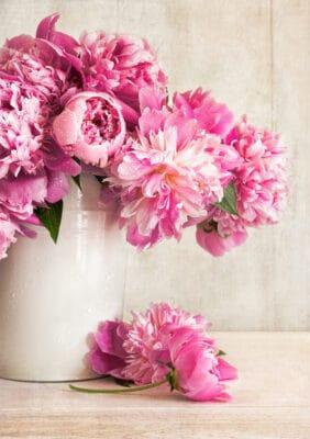 peonie rosa - consegne a domicilio